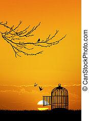 jaula, para, Aves, en, ocaso,