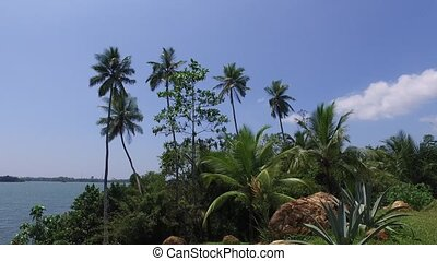 view to ocean from Sri Lanka island with palms - travel,...