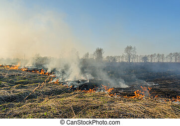 A natural disaster Fire in nature - A natural disaster...