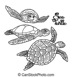 Hawksbill sea turtle collection - Graphic Hawksbill sea...