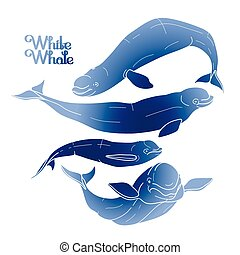 Graphic beluga whale collection. White whale. Sea creature...