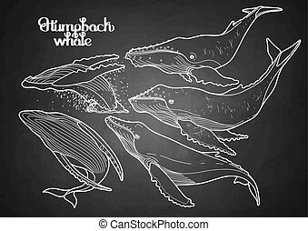 Graphic humpback whales - Collection of graphic humpback...