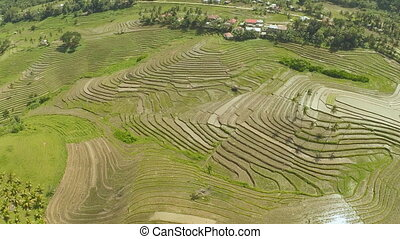 Rice Field Terrace Aerial Shot Philippines - Rice Field...
