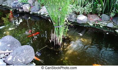 Tranquil scene. Koi fish. Zen.