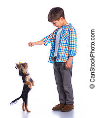 Boy playing with her yorkshire terriers - Cute little boy...