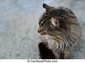 unruffled wild cat. Sitting and look away