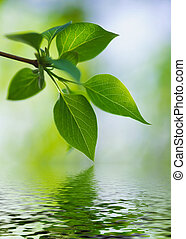 green lush foliage of tree on a blur backgrounds - green...