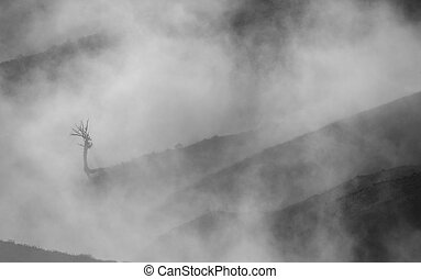 Lonely dead tree in the fog