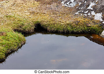 Small Pond - Edge of an small natural pond on a island