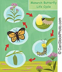 Monarch Butterfly Life Cycle - Colorful cartoon diagram of...