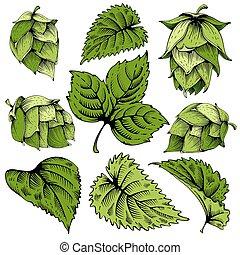 Hops elements set - Vintage designs elements set with hops...