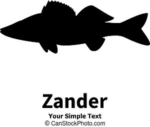 Vector illustration silhouette of zander. Isolated fish on a...