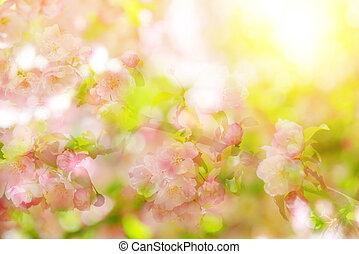 Spring bokeh flowering tree against sunlight. Spring season....