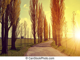 Asphalted road and avenue of poplars in the sunset