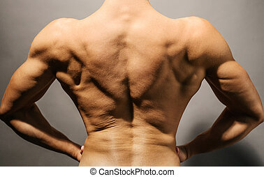Bodybuilder's, back,