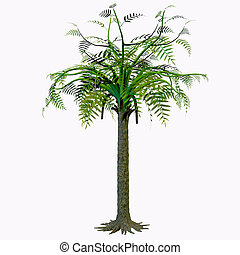 Alethopteris Tree - Alethopteris zeilleri is a foliar...