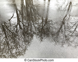 sidewalk with puddles and trees reflection - wet asphalt...