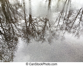 reflection on the wet asphalt road - trees silhouettes are...