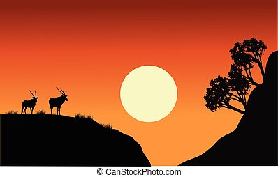 Silhouette of antelope with sun at the sunset