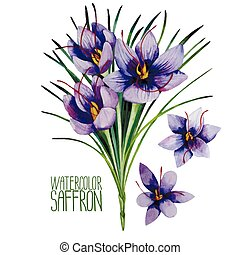 Watercolor saffron flowers - Saffron flowers. Watercolor...