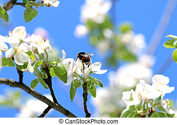 spring flowers, pollinate slogger bees collect honey