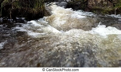 Wild spring stream flows through taiga forest - Viev from...