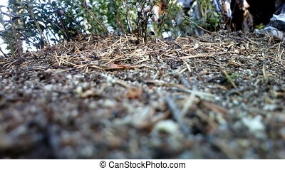ants in  ant colony