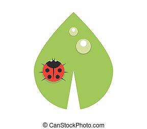 Flat leaf with drops of dew and ladybird