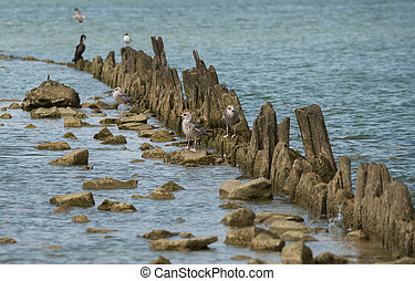 Birds on the coast of the Sea of Azov