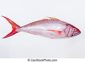 Whole fresh red fish isolated on white background