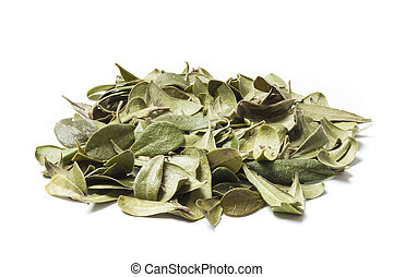 Bearberry Leaves on a Pile - Bearberry leaves isolated on...