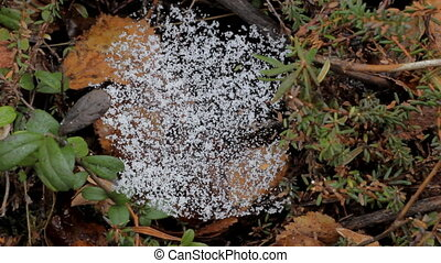 web nature cold weather - first snow stayed on web. changing...