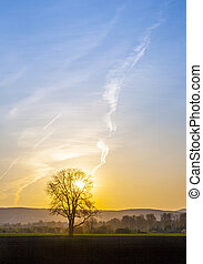 sunset with blue sky and tree - romantic sunset with blue...