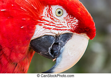 Parrots close up at zoo