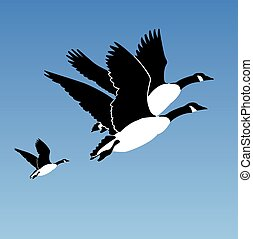 Trio of Geese Canada Geese Flying Against A Blue Sky