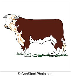 Vector Colour Hereford Bull - Vector Hereford Bull...
