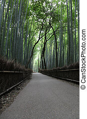 Empty path leading through a Bamboo forest - Arashiyama district in Kyoto Japan