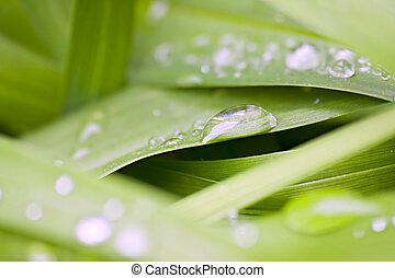 Shallow focus of water droplets on green leaves