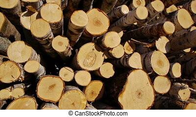Stack of wood logs