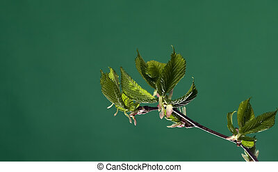 Branch with leaves on green background