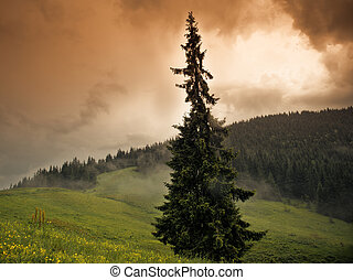 Carpathian mountains - Summer landscape in the Carpathian...