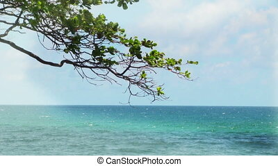 Tropical Sea - Tropical sea and tree branch with green...