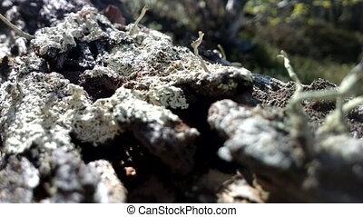 Wood ants. Nest inside trunk of fallen tree - Ant nest...