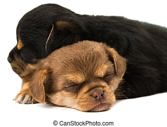 sleeping puppies isolated on white background