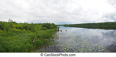 river in Karelia summer Panorama