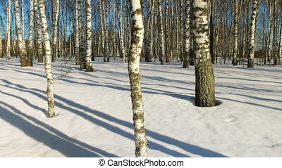 Sunny day in winter forest - Time lapse shoot of moving...