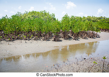 Forest at the river estuary, Mangroves - Forest at the river...