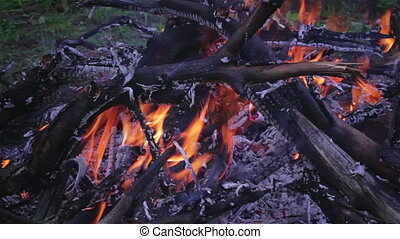 Fire in nature - The fire in the forest. The flame plays on...
