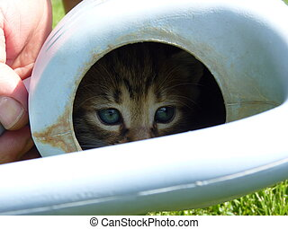 A kitten in a watering pot - A kitten hiding in a watering...