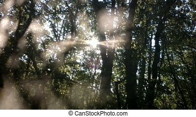 Sun rays playing through leaves and branches of forest - Sun...